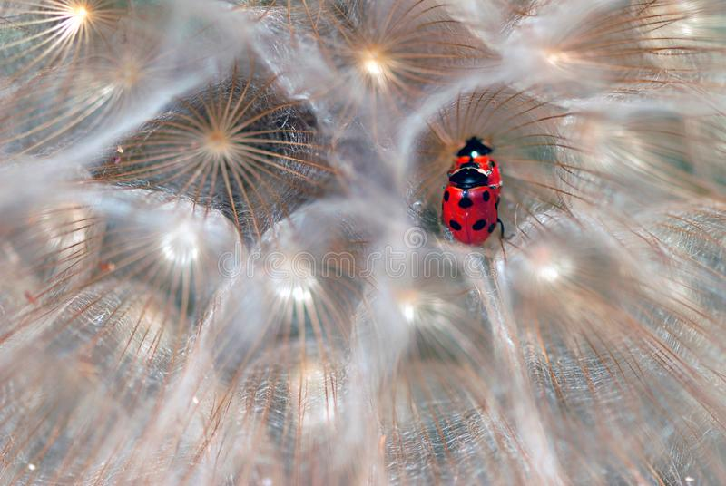 Download Ladybirds stock image. Image of grass, black, biology - 19503847