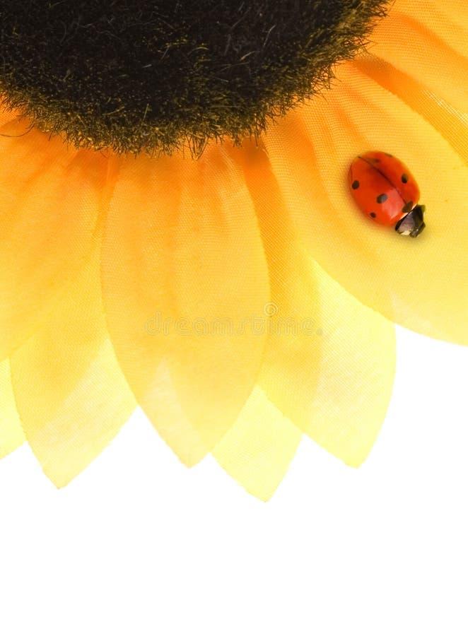 ladybug ηλίανθος συνεδρίασης στοκ φωτογραφίες με δικαίωμα ελεύθερης χρήσης