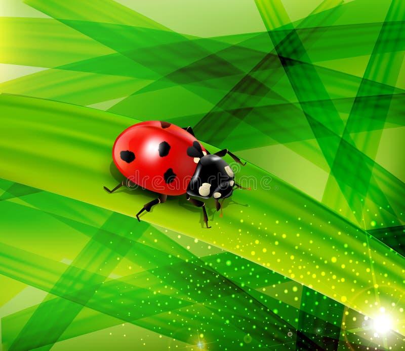 ladybug στην ανασκόπηση της πράσινης πολύβλαστης χλόης απεικόνιση αποθεμάτων