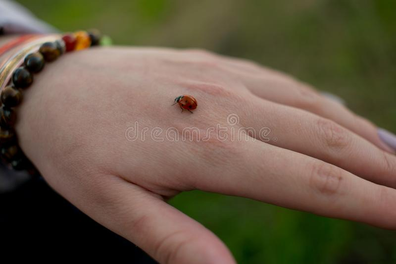 Ladybug вползая на руке девушки стоковое фото rf