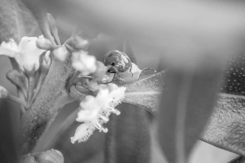 Ladybug над зелеными лист стоковые изображения