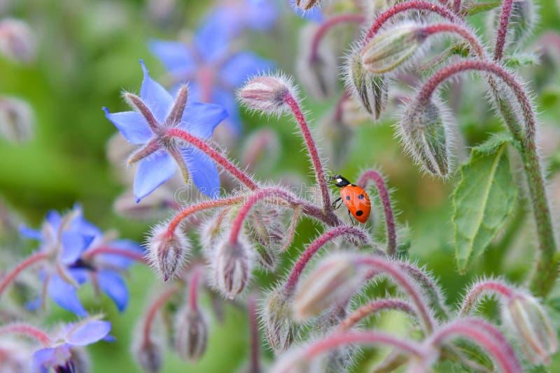 Ladybug на красивом стержне цветка стоковые фото