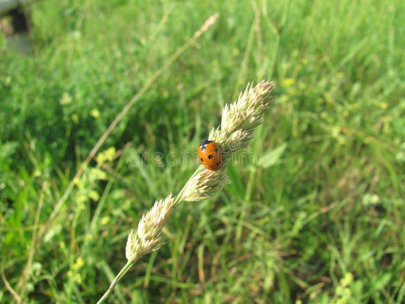 Ladybug на стекле стоковые фотографии rf