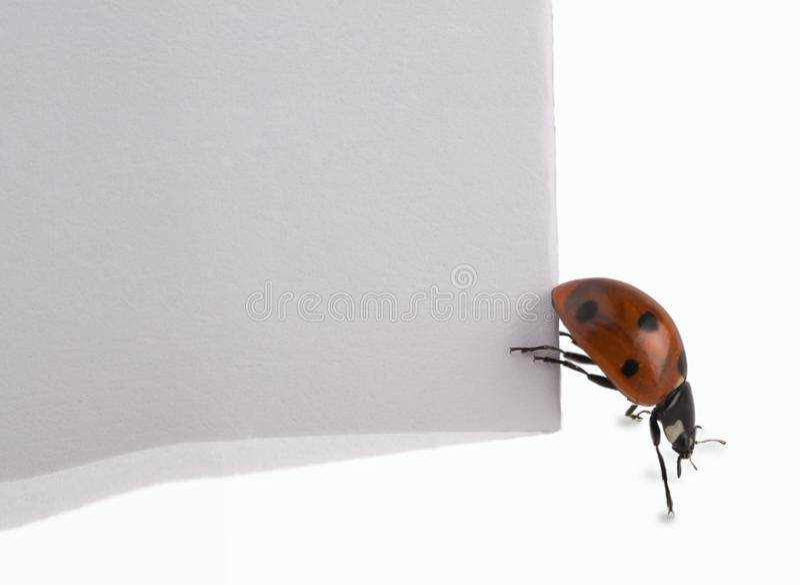 Download Ladybug stock image. Image of text, holding, rice, spot - 10617677