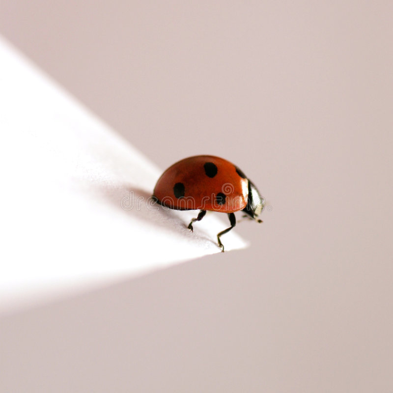Ladybug Immagine Stock