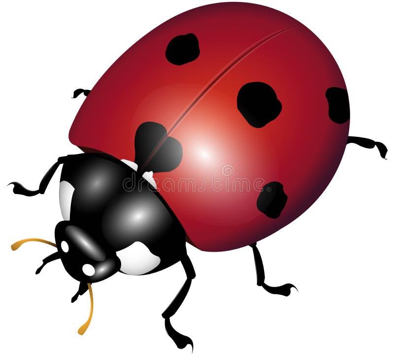 Ladybug illustrazione di stock