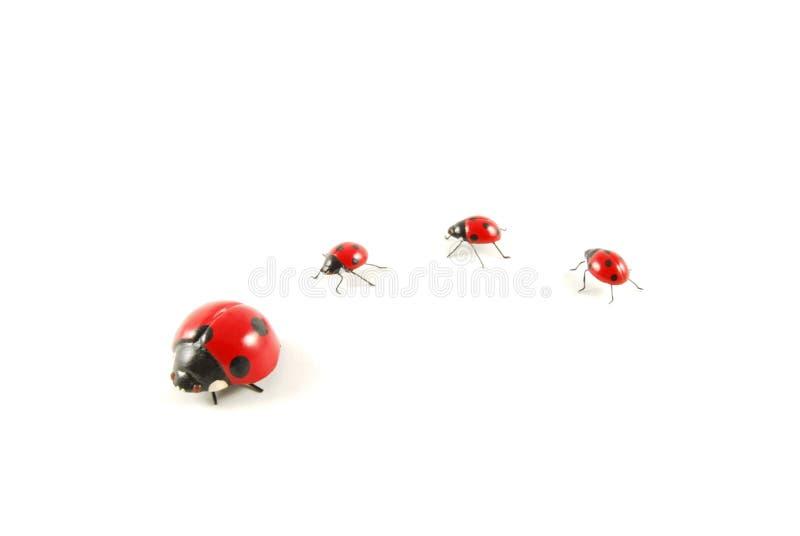 Ladybug 2 royalty free stock image