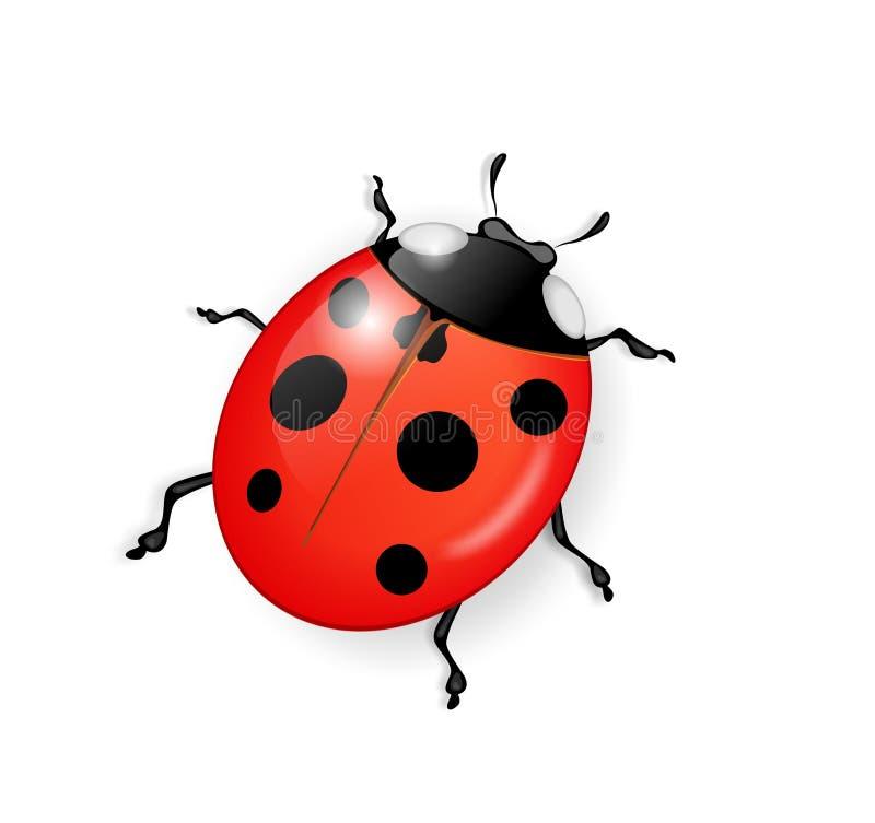 ladybug бесплатная иллюстрация