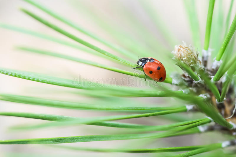 Download Ladybug stock image. Image of sunlight, insect, background - 24686987