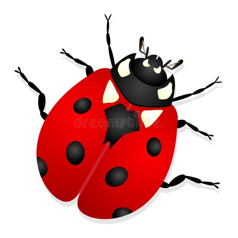 Ladybug illustrazione vettoriale