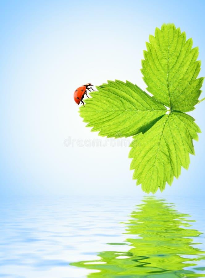 ladybug стоковое фото rf