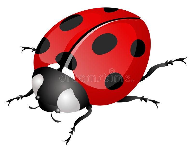 Ladybug. Illustration of ladybug isolated on white