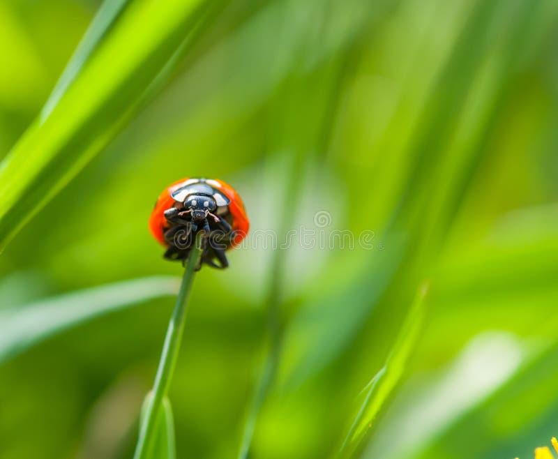 LadyBug [02] foto de stock