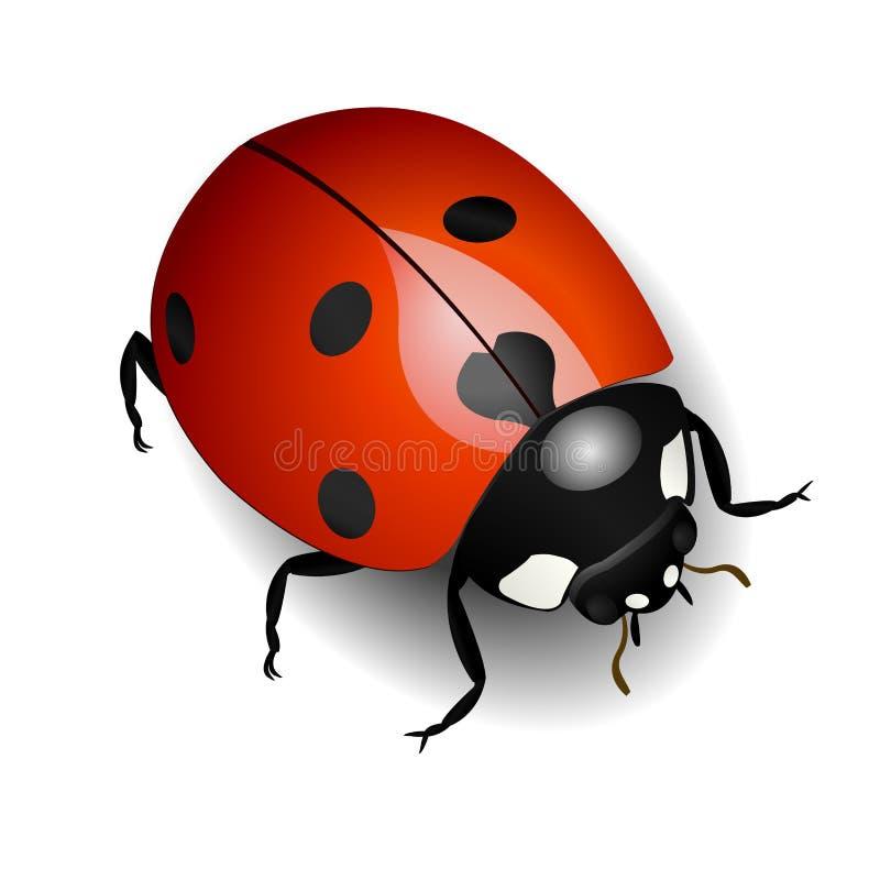 Free Ladybug Royalty Free Stock Images - 8024469
