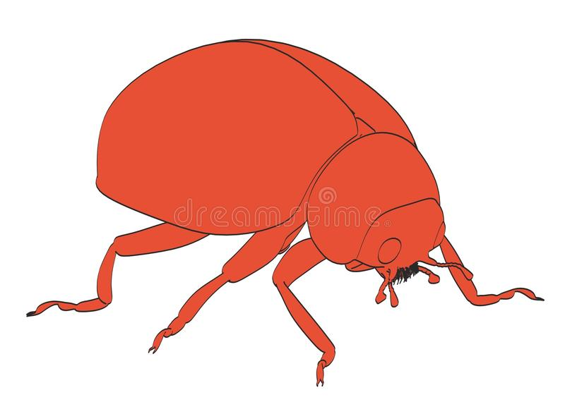 02 ladybug ελεύθερη απεικόνιση δικαιώματος