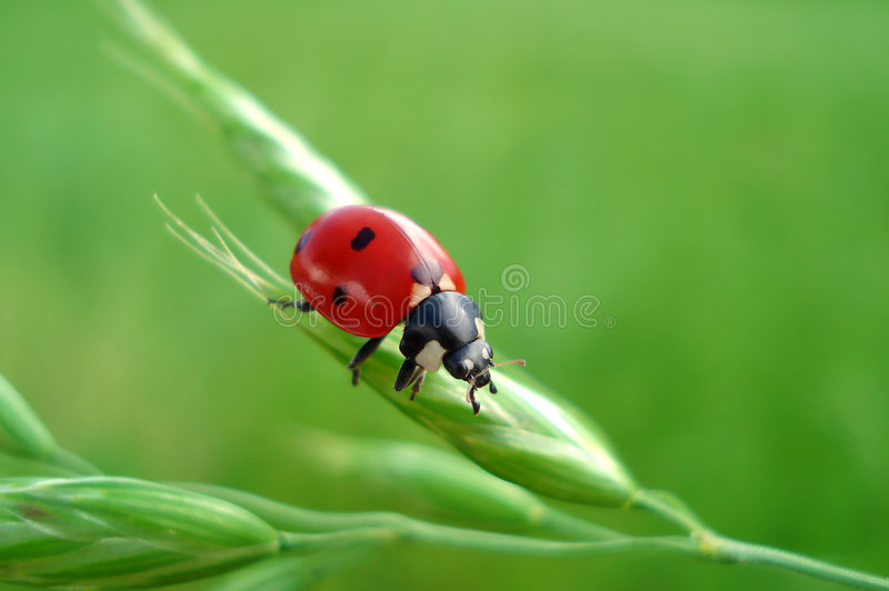 LadyBug bonito - sinal de Happyness imagens de stock