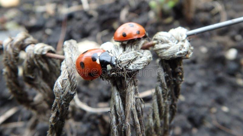 Ladybug Bridge royalty free stock photo