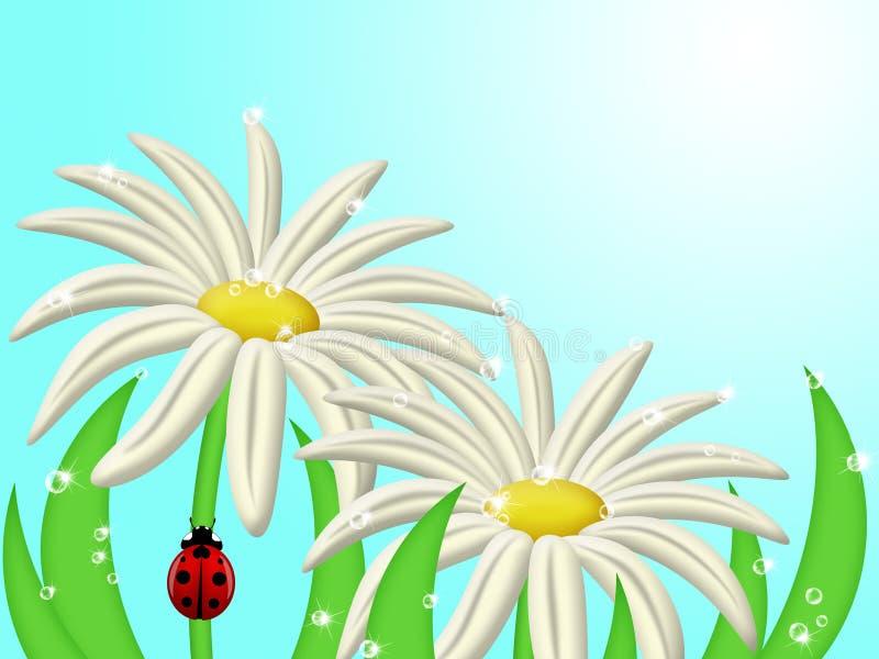 Download Ladybug Climbing Up Daisy Flower Stem Stock Illustration - Image: 18074525