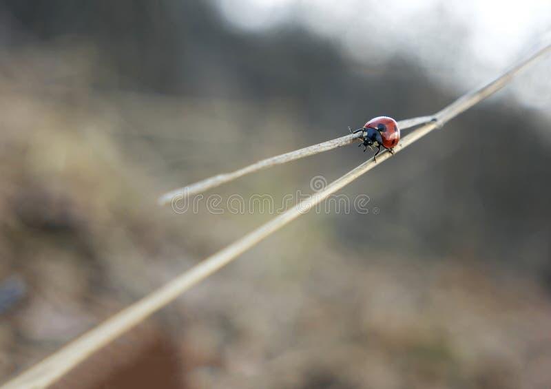 Ladybug at crossroads stock photo