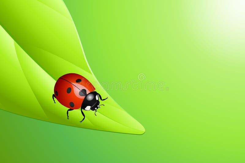 Ladybug em uma folha ilustração royalty free