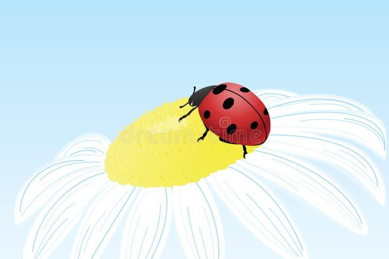 Ladybug en la flor de la manzanilla ilustración del vector