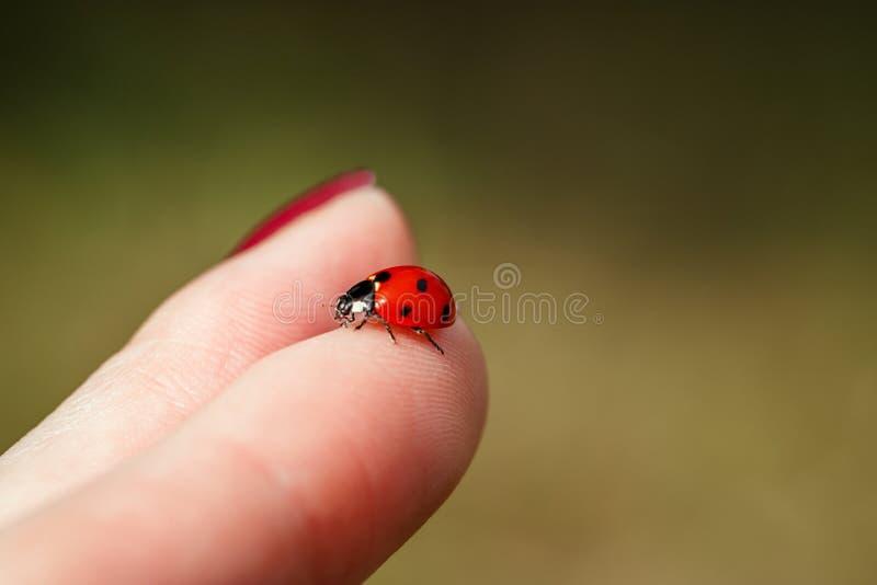 Ladybug on finger. Beautiful summer background. Ladybug on hand on yellow background close-up stock photography