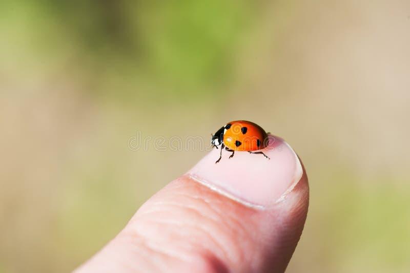 Ladybug on a finger stock image