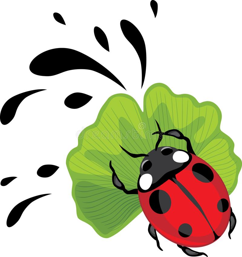 Ladybug on ginkgo biloba leaf stock photo