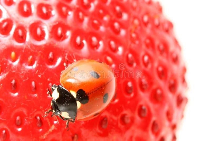 Download Ladybug Gourmet Stock Photos - Image: 24461713