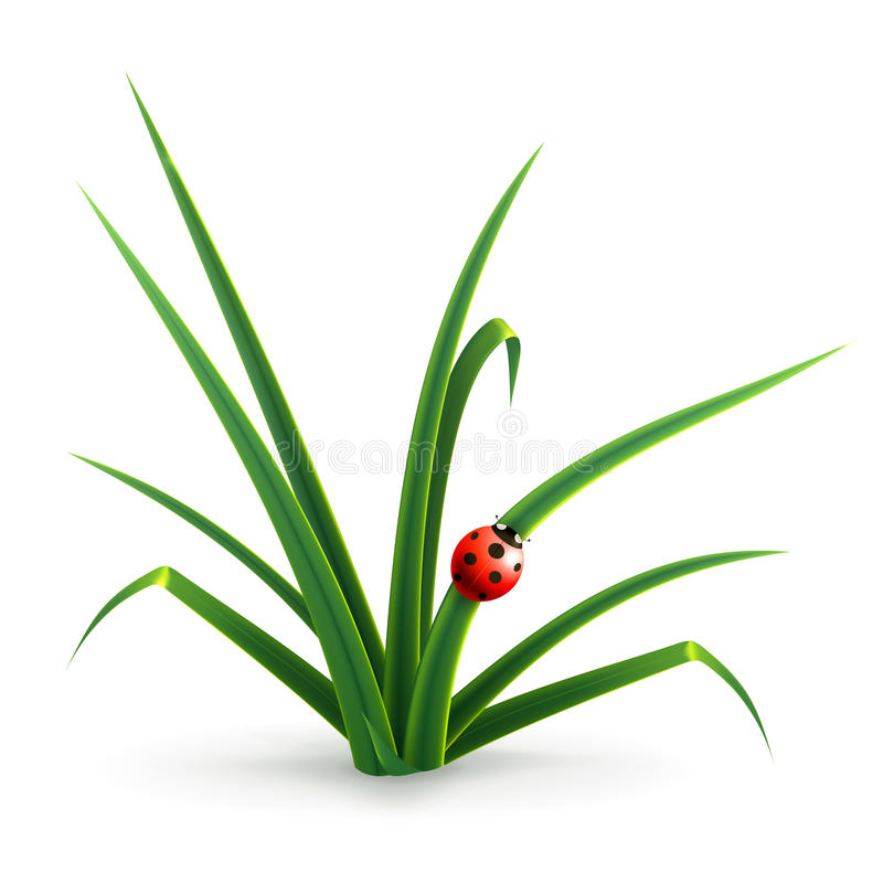Ladybug and grass stock illustration