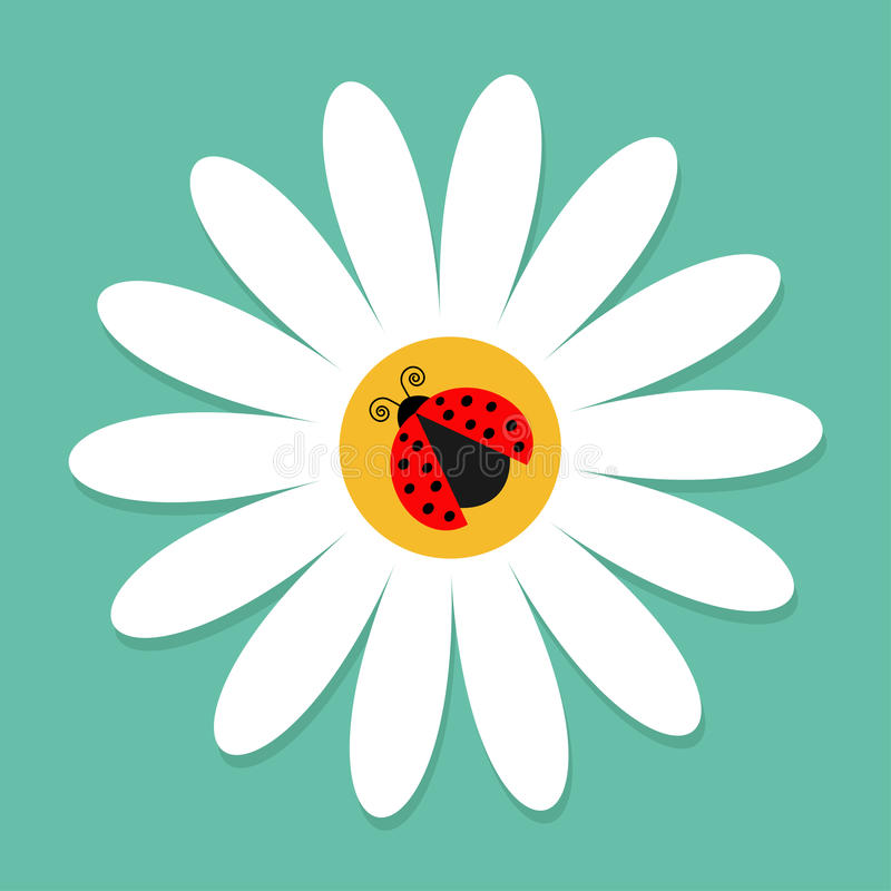 Free Ladybug Ladybird Insect On White Daisy Chamomile. Camomile Icon. Cute Growing Flower Plant Collection. Love Card. Cartoon Characte Royalty Free Stock Image - 95192826