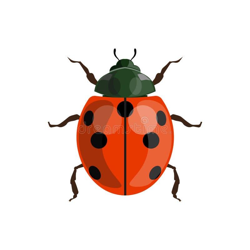 Ladybug ladybird vector. Ladybug ladybird top view. Vector illustration isolated on a white background stock illustration