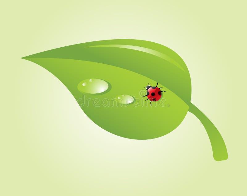 Ladybug on leaf. Beautiful ladybug on a green leaf stock illustration