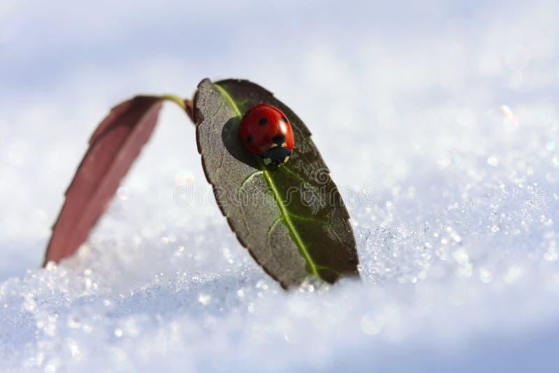 Ladybug on a leaf in a winter sunny day