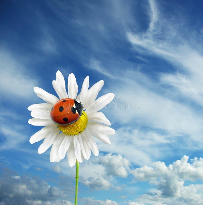 Download Ladybug na flor imagem de stock. Imagem de fauna, ladybug - 12804089