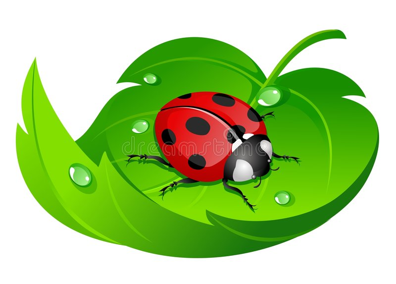 Ladybug na folha ilustração royalty free