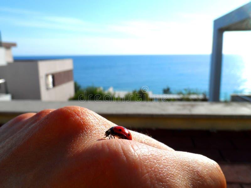 Ladybug na mão imagem de stock royalty free