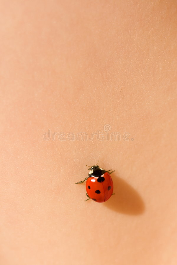 Free Ladybug On Skin Royalty Free Stock Photography - 5850297