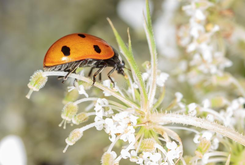 Ladybug on a plant in nature stock photo