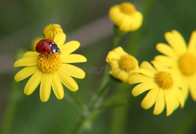 Ladybug playground royalty free stock photo