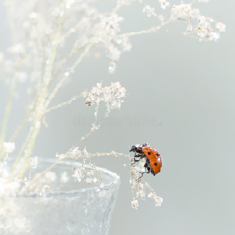 Ladybug que se sienta en una flor fotografía de archivo