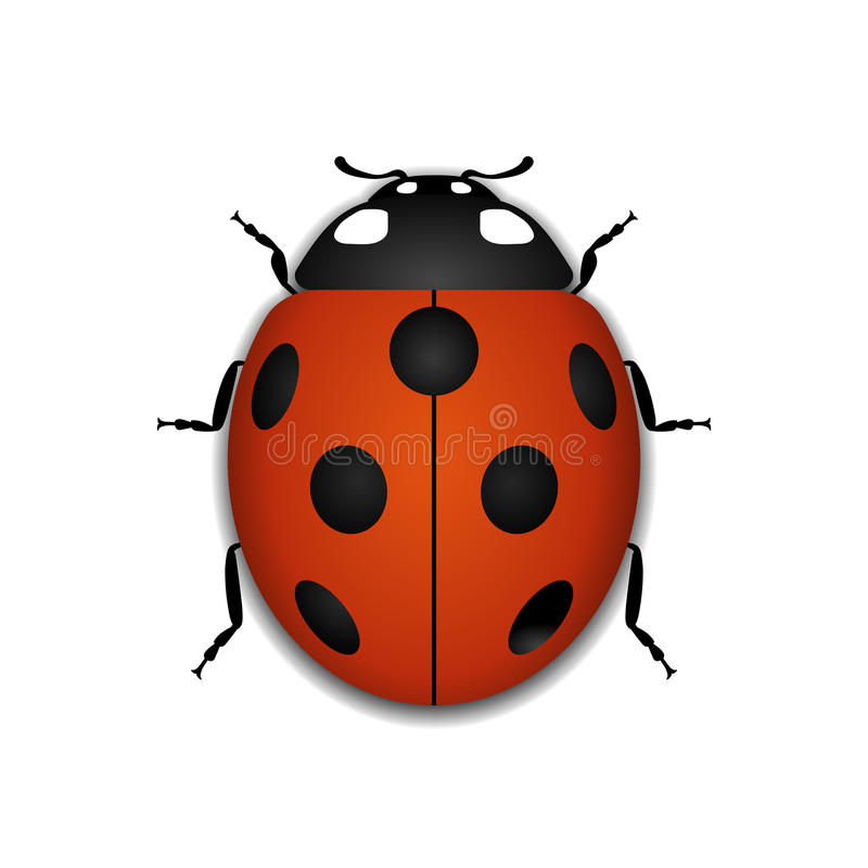 Ladybug red cartoon icon realistic. Ladybug small icon. Red lady bug sign, on white background. 3d volume design. Cute colorful ladybird. Insect cartoon beetle vector illustration