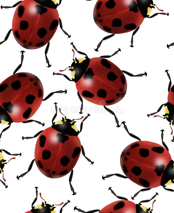 Ladybug seamless pattern royalty free stock photo