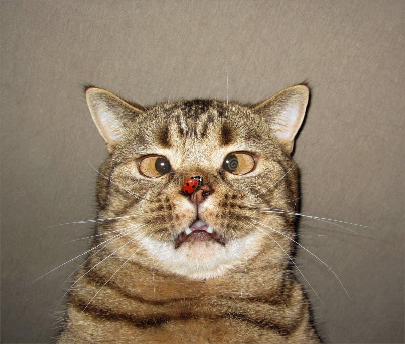 Cat and ladybug royalty free stock image