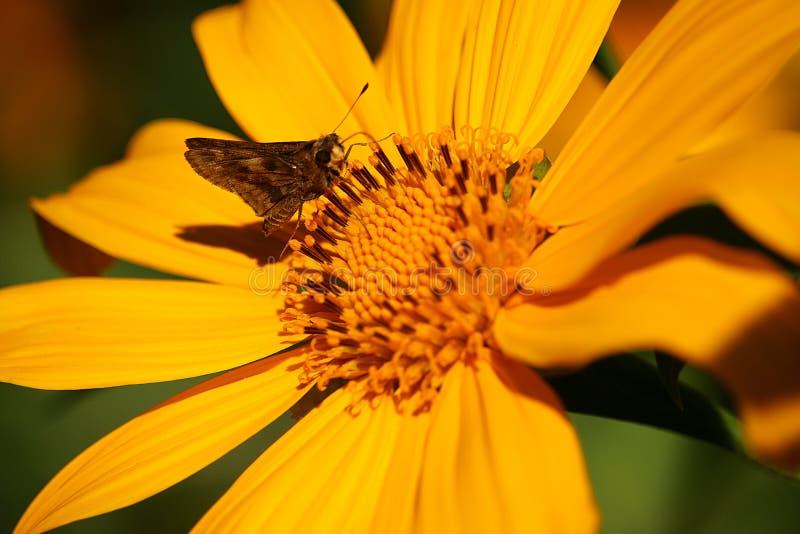 Ladybug in stalk stock image