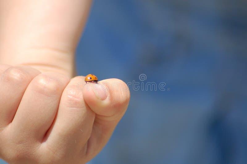 Ladybug sulla mano del bambino fotografia stock
