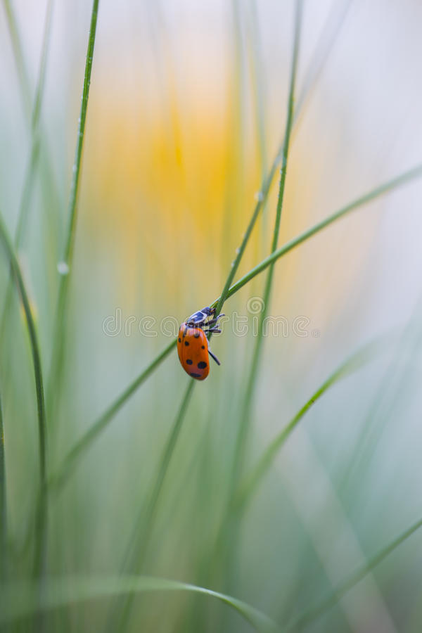 A ladybug and the sun royalty free stock image