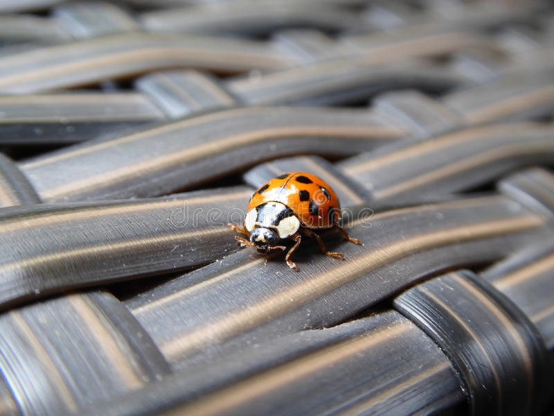 Ladybug on Terrace Chaise royalty free stock photo