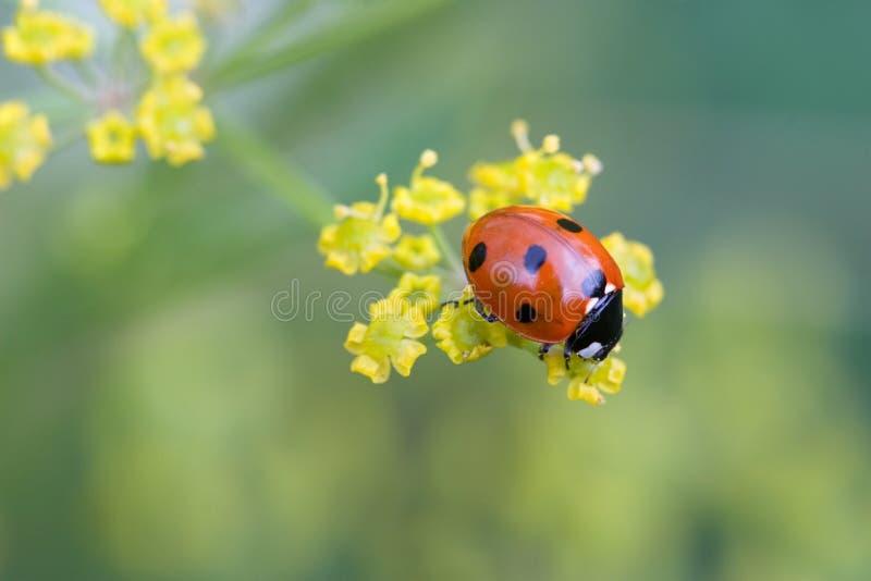 Download Ladybug on top stock photo. Image of pattern, back, macro - 2217214