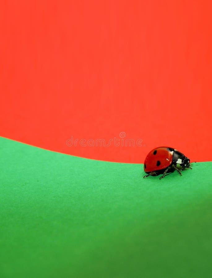 Ladybug Walking
